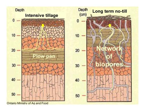 Intensive Tillage vs Non Tillage Graphic