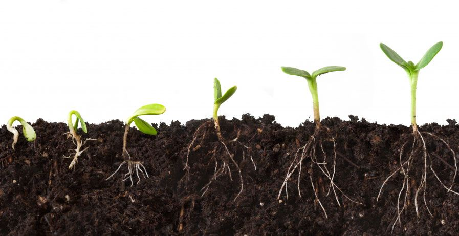Cultivate Soil Before Seeding it