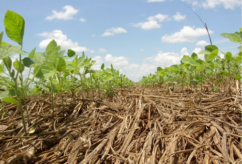 Using Cover Crops