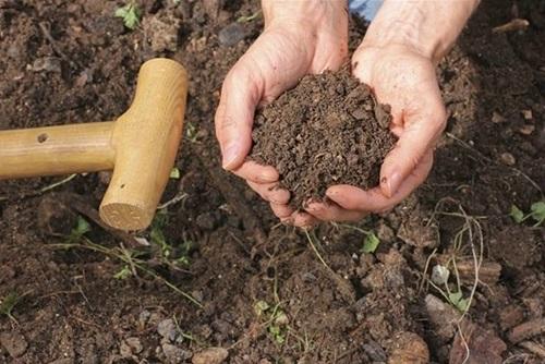 Holding Loamy Soil