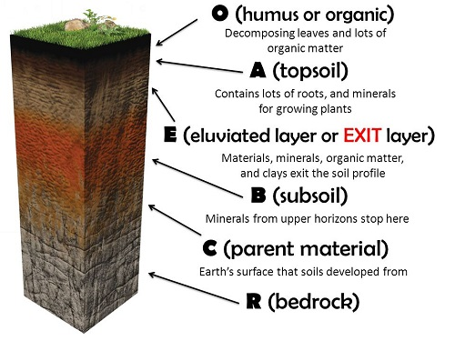 Illustration Of Soil Forming