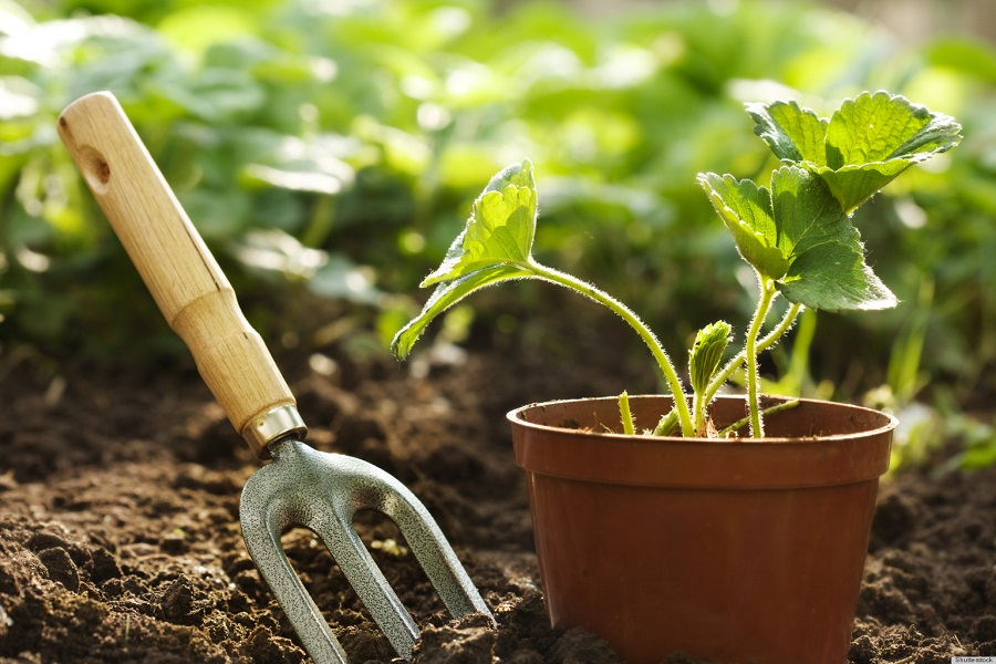 How To Fertilize A Garden