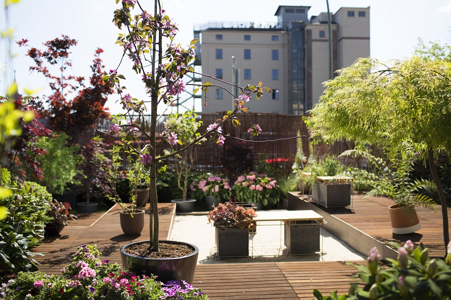 The Urban Gardening Trend: A Guide
