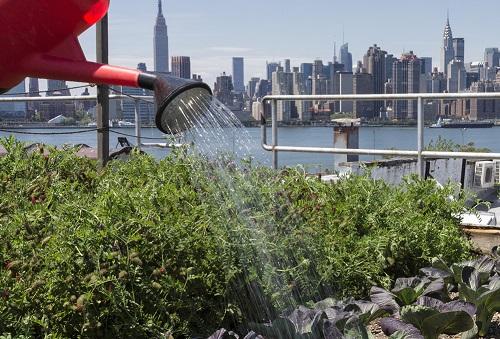 Urban Rooftop Gardening