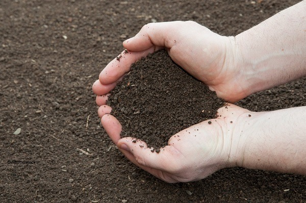 Holding soil in hands.
