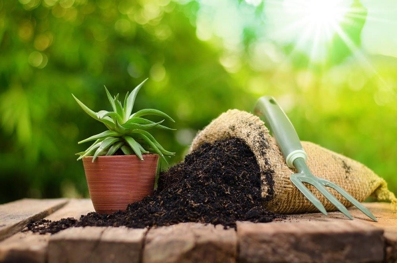 A Guide To Determining The Quality Of Your Soil