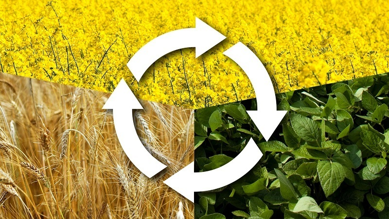 Learn Everything About Crop Rotation
