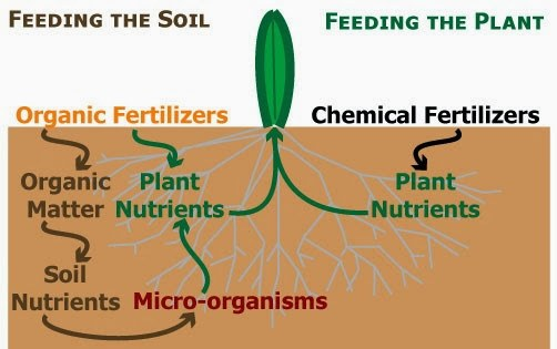 Synthetic Fertilizers Vs. Organic Fertilizers