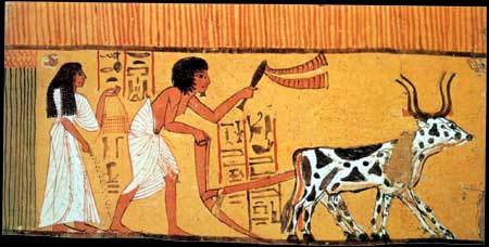 Paintings in ancient Egypt depicting tilling.