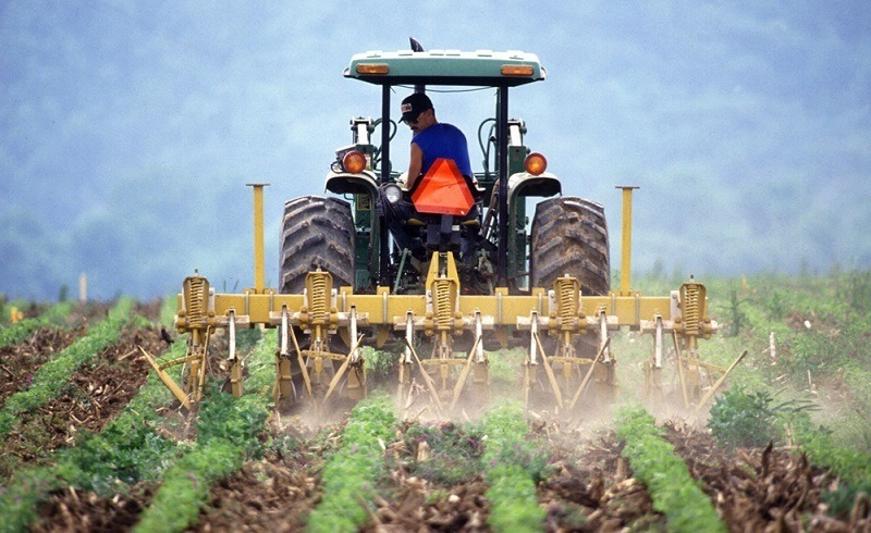 Weed Control: Using A Cultivating Process To Your Advantage