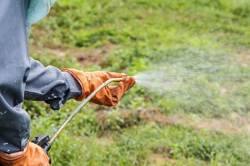 Spraying With Weed Killer