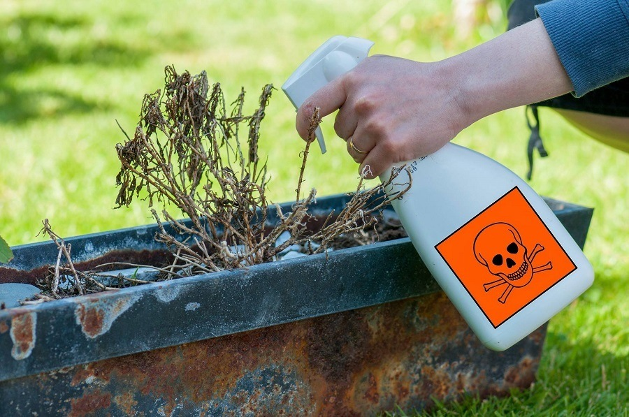 A Precise Guide To Buying The Best Weed Killer