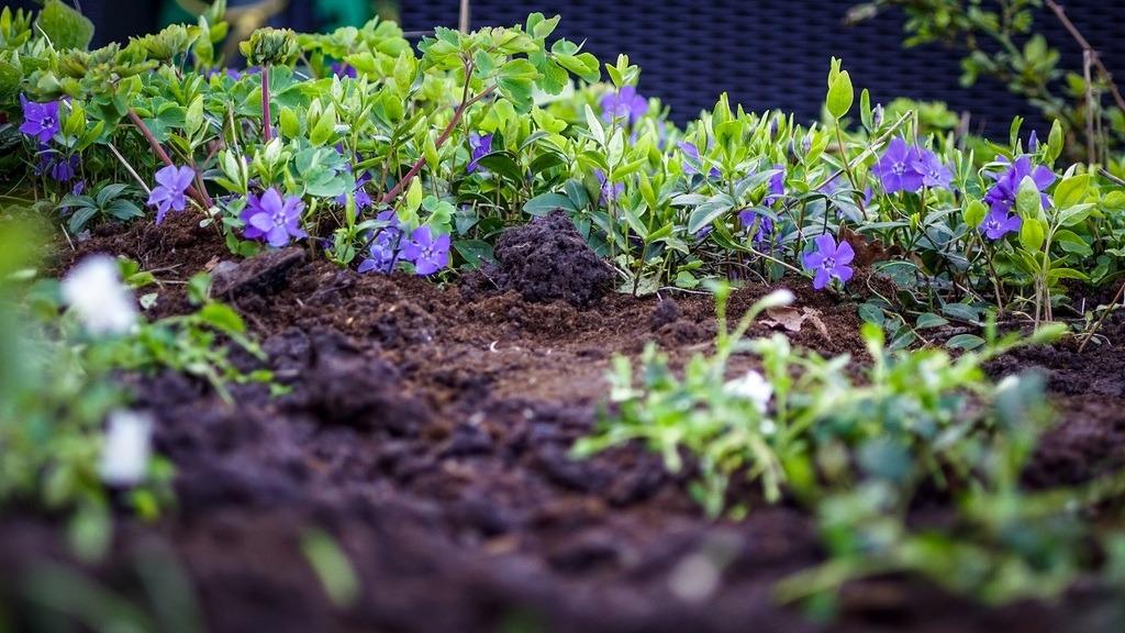 best garden soil featured image