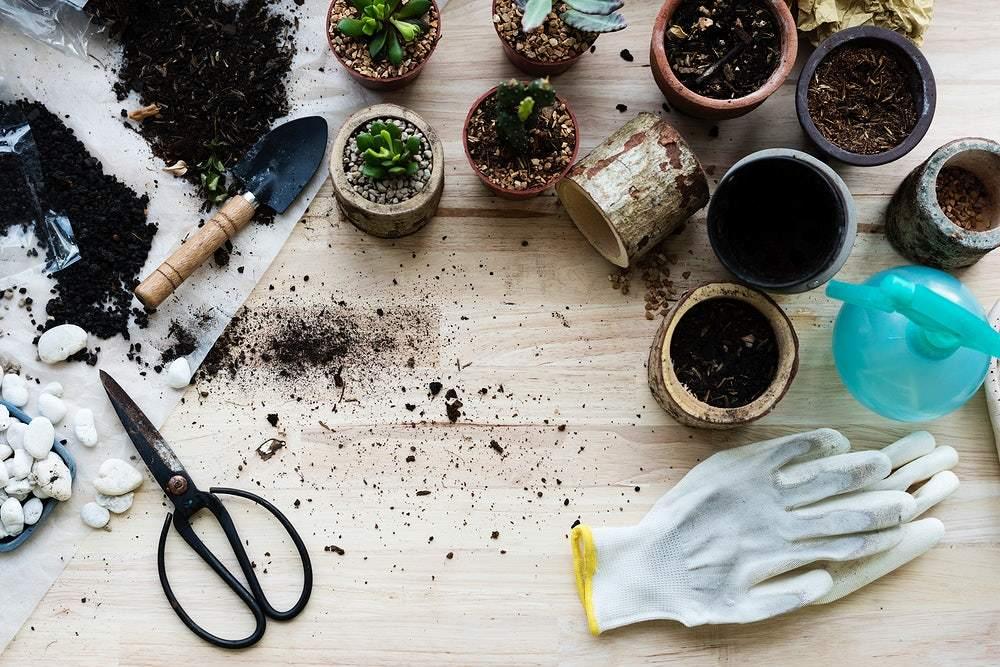 lawn fertilizer image